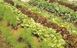 Sammen med salat